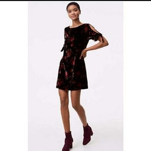 Loft. NWT womens velvet dress
